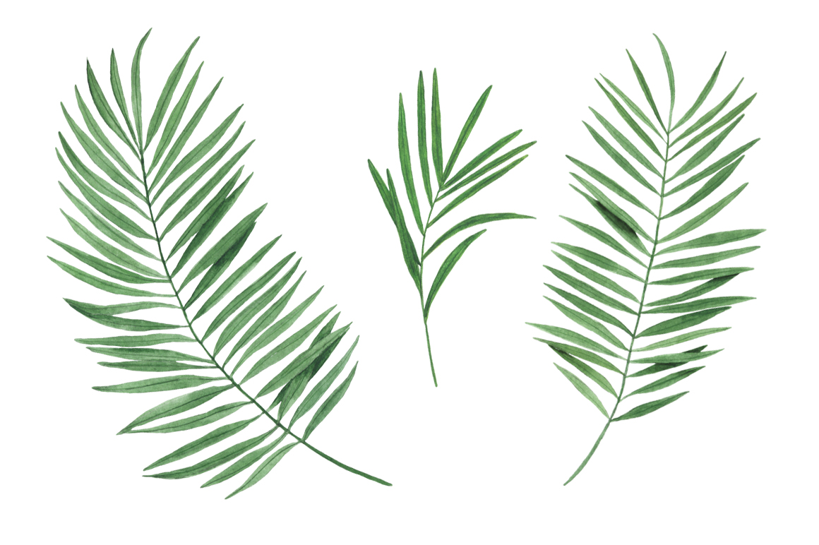 Watercolor tropical clipart example image 8
