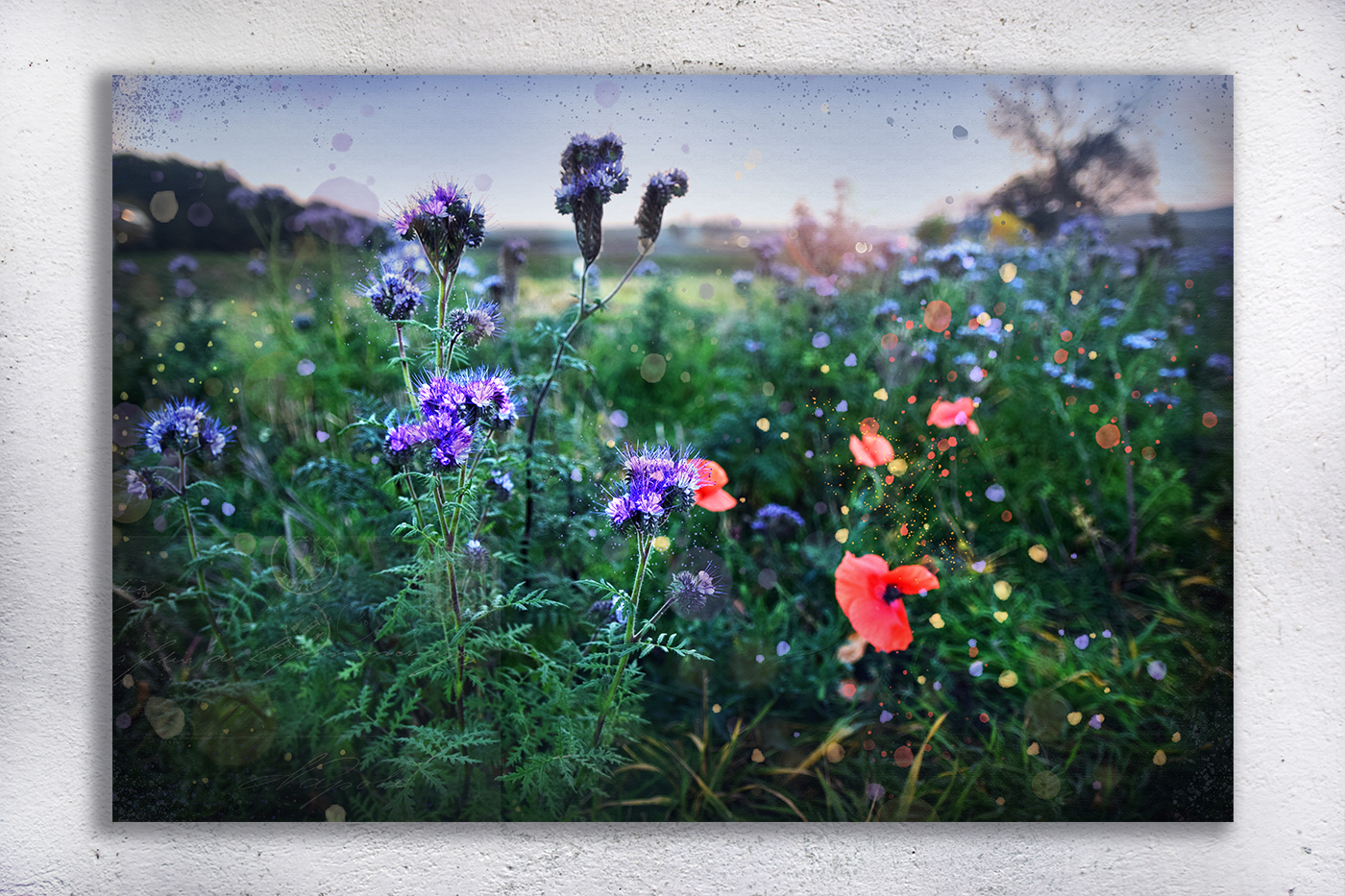 Nature photo, floral photo, summer photo, Wildflowers example image 4