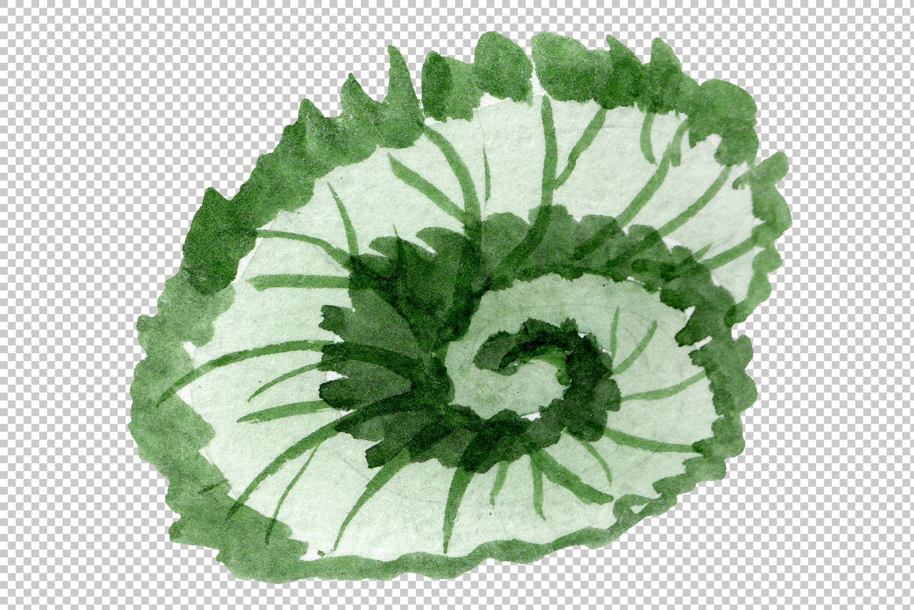 Begonia leaves Watercolor png example image 6
