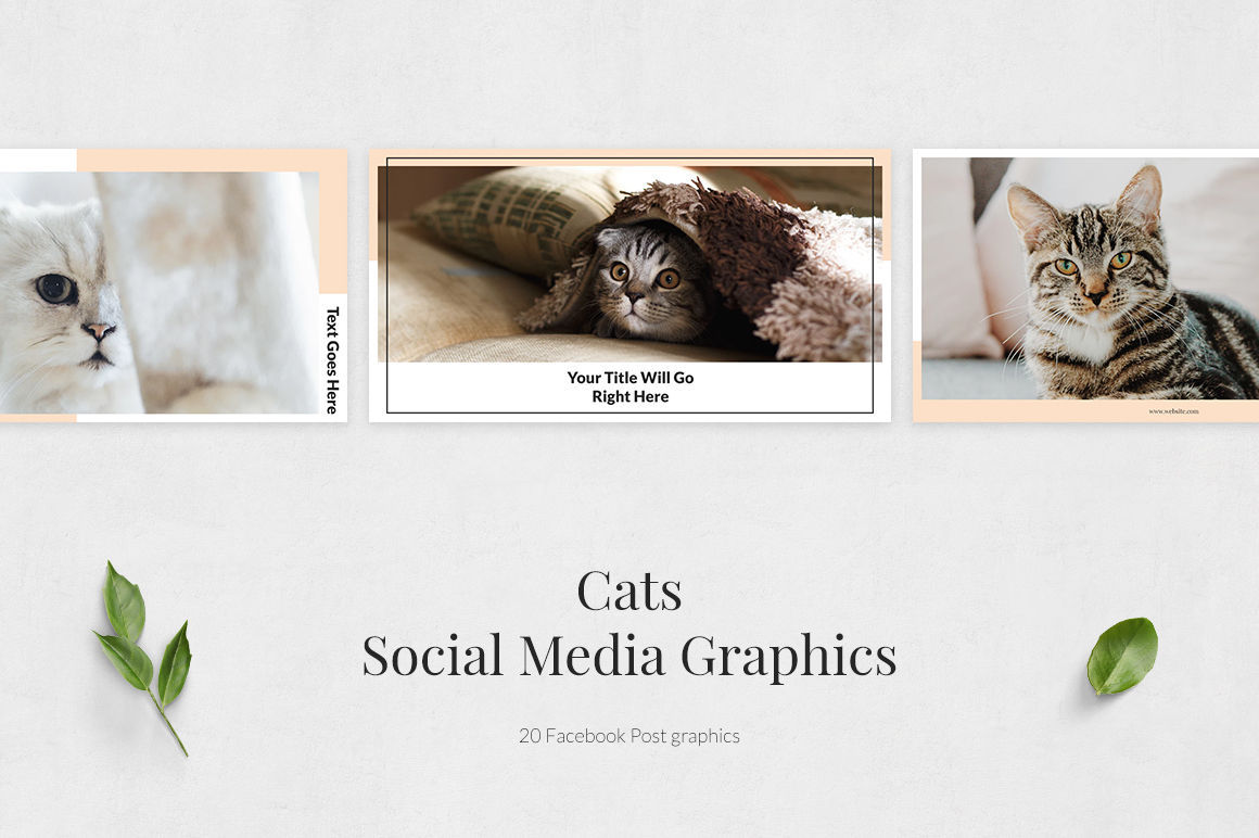 Cats Facebook Posts example image 2