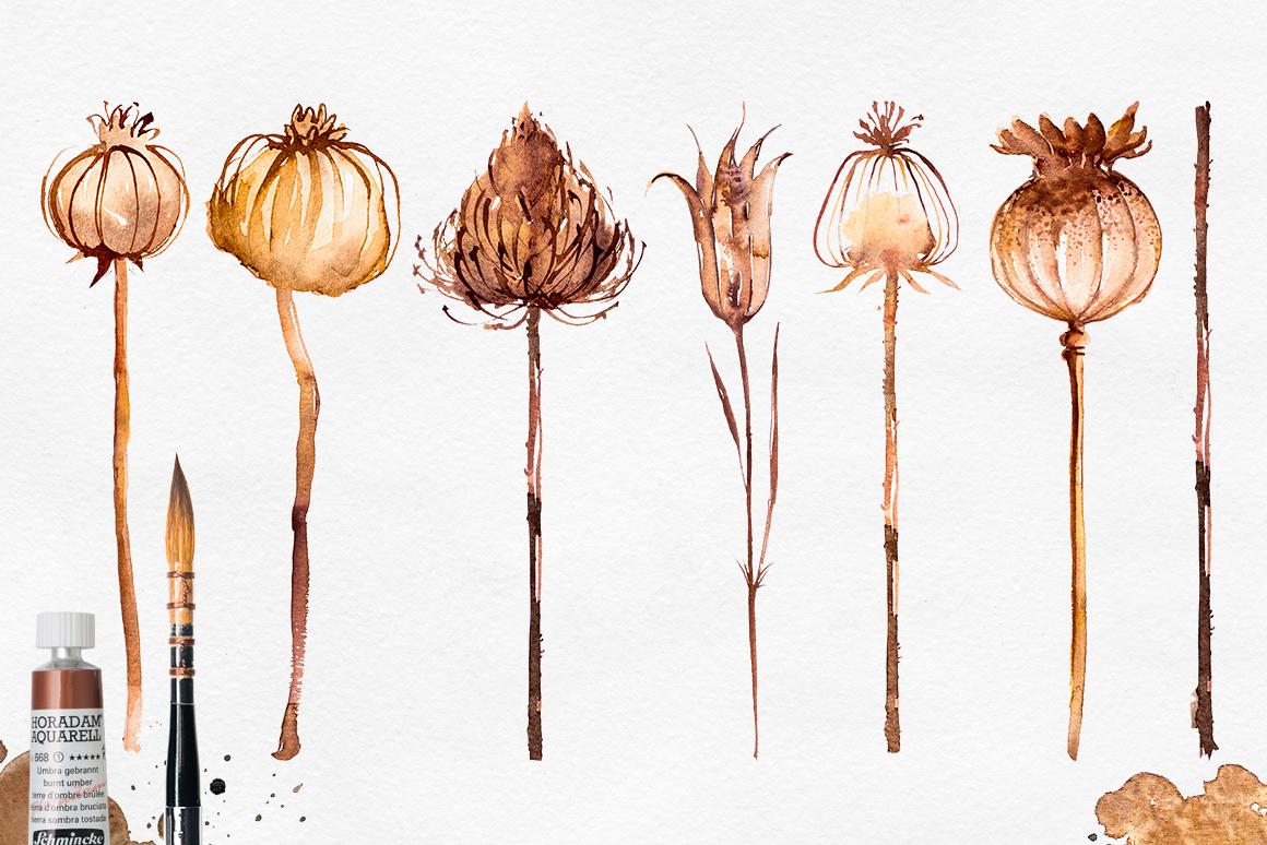 Herbarium Master Collection example image 2