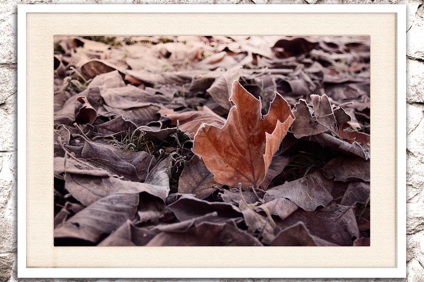 Nature photo, flora photo, leaf photo, winter photo example image 3