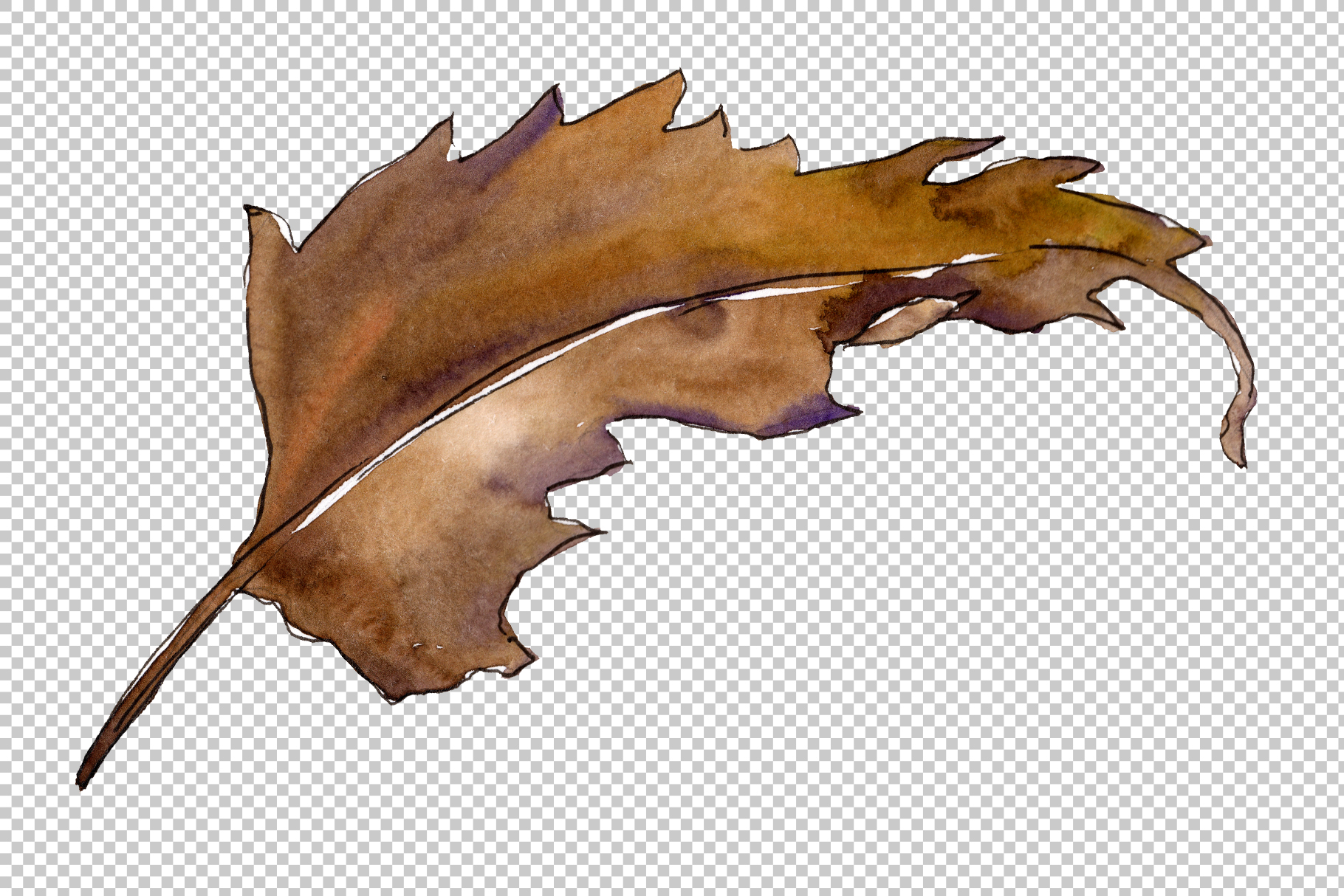 Sweet chestnut PNG watercolor leaves set example image 2