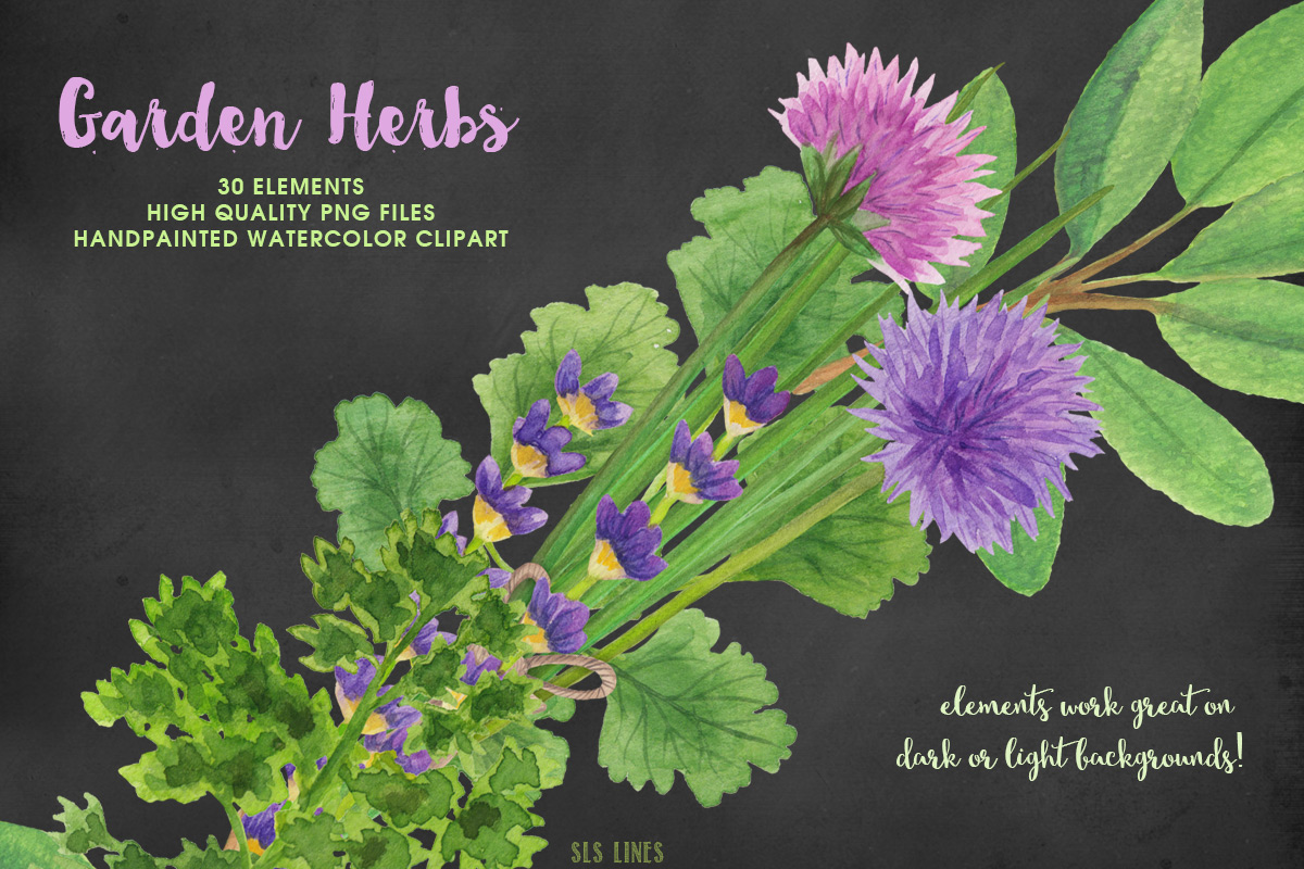 Garden Herbs Watercolor Clipart, PNG example image 6