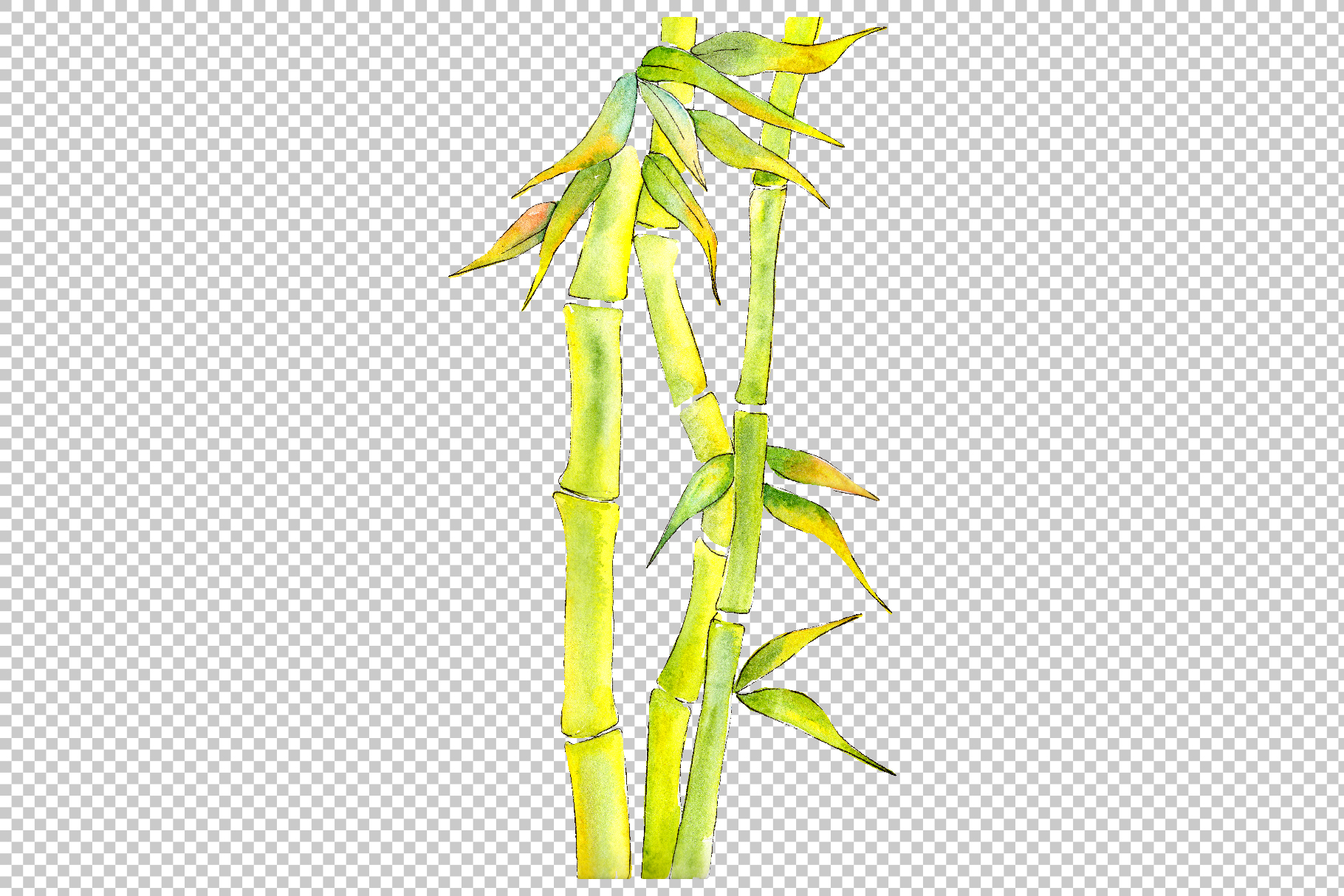 Bamboo watercolor product png example image 5