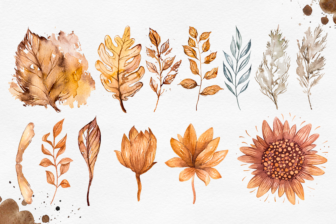 Herbarium Master Collection example image 7