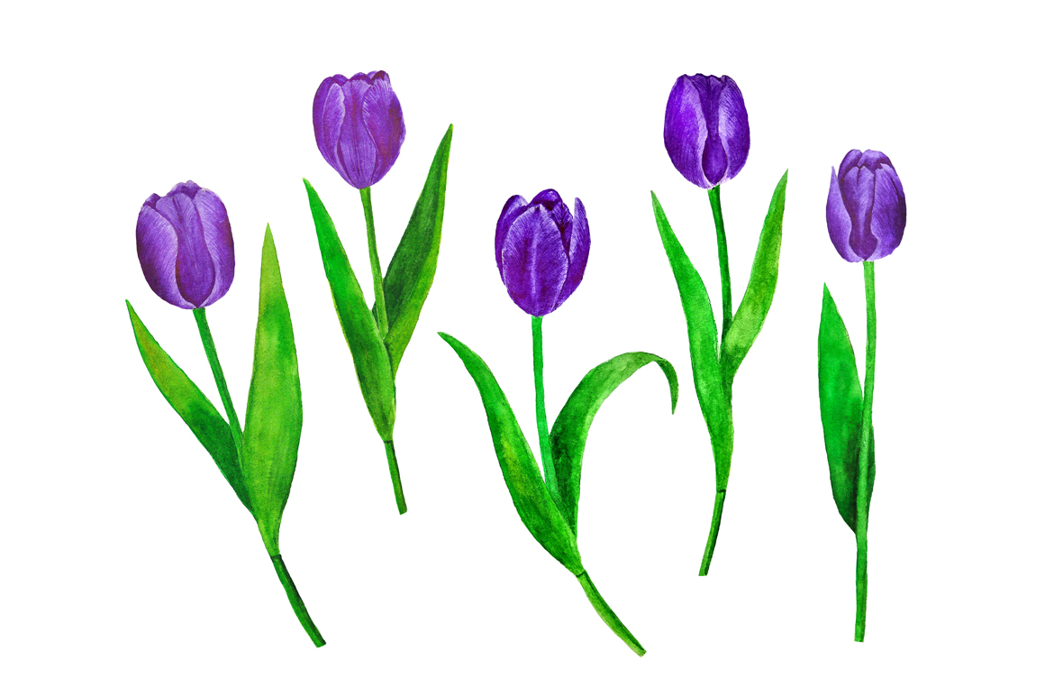 Flowers Tulips Watercolor example image 9