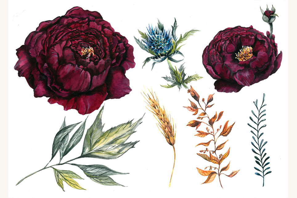 Flower set, Peony clipart, flower clipart, floral elements example image 5
