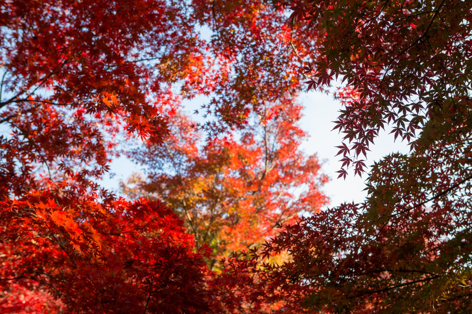 Autumn Leaves #9 example image 1
