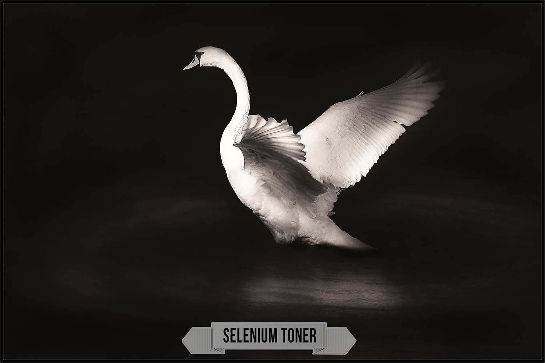 Darkroom Toners Vol. 3 profiles Lightroom ACR example image 16