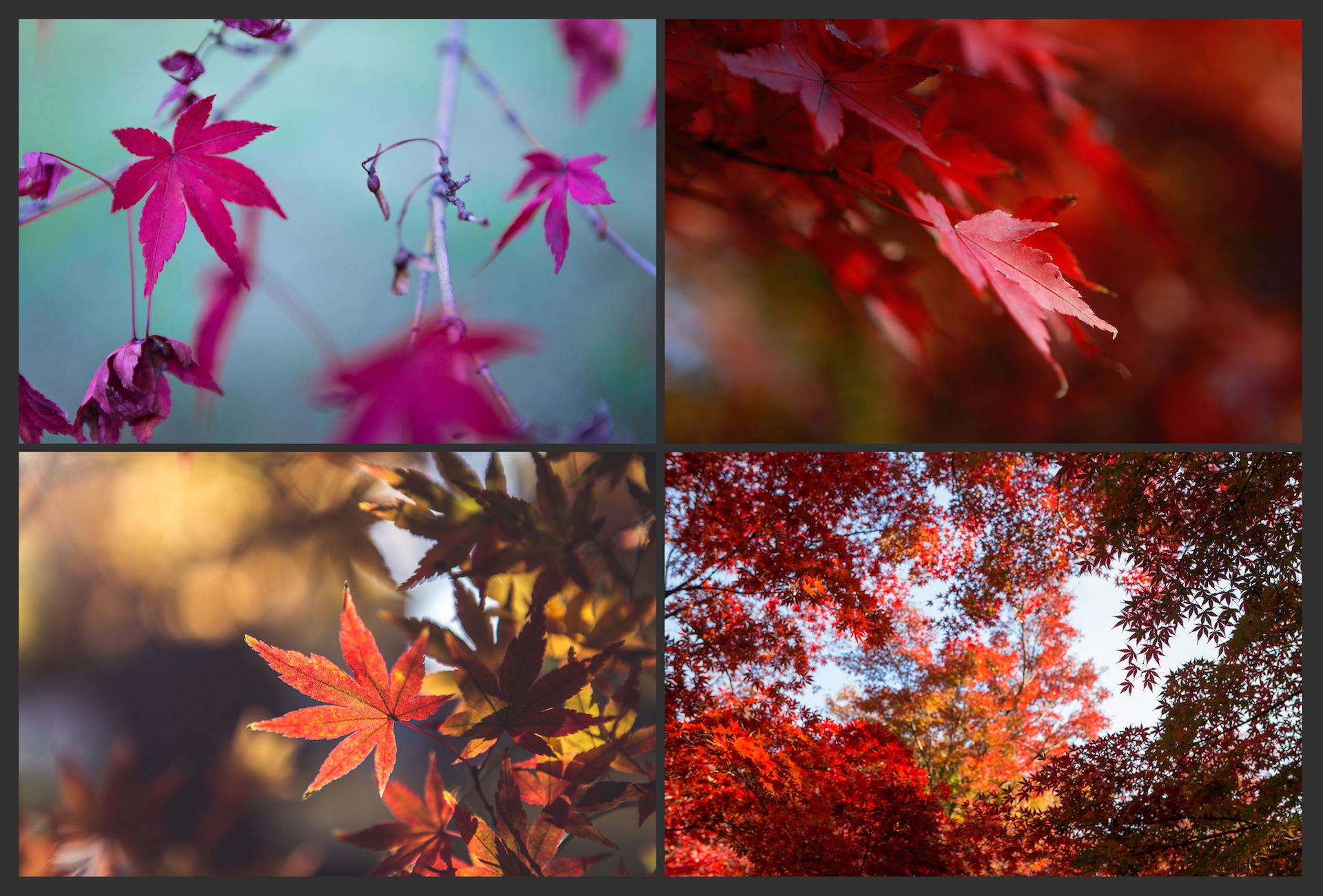 The AUTUMN LEAVES Pack example image 2