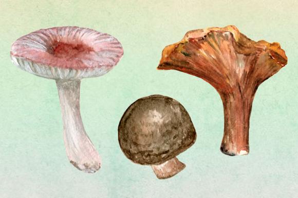 10 Watercolor Mushroom Set + 3 Bonus example image 3