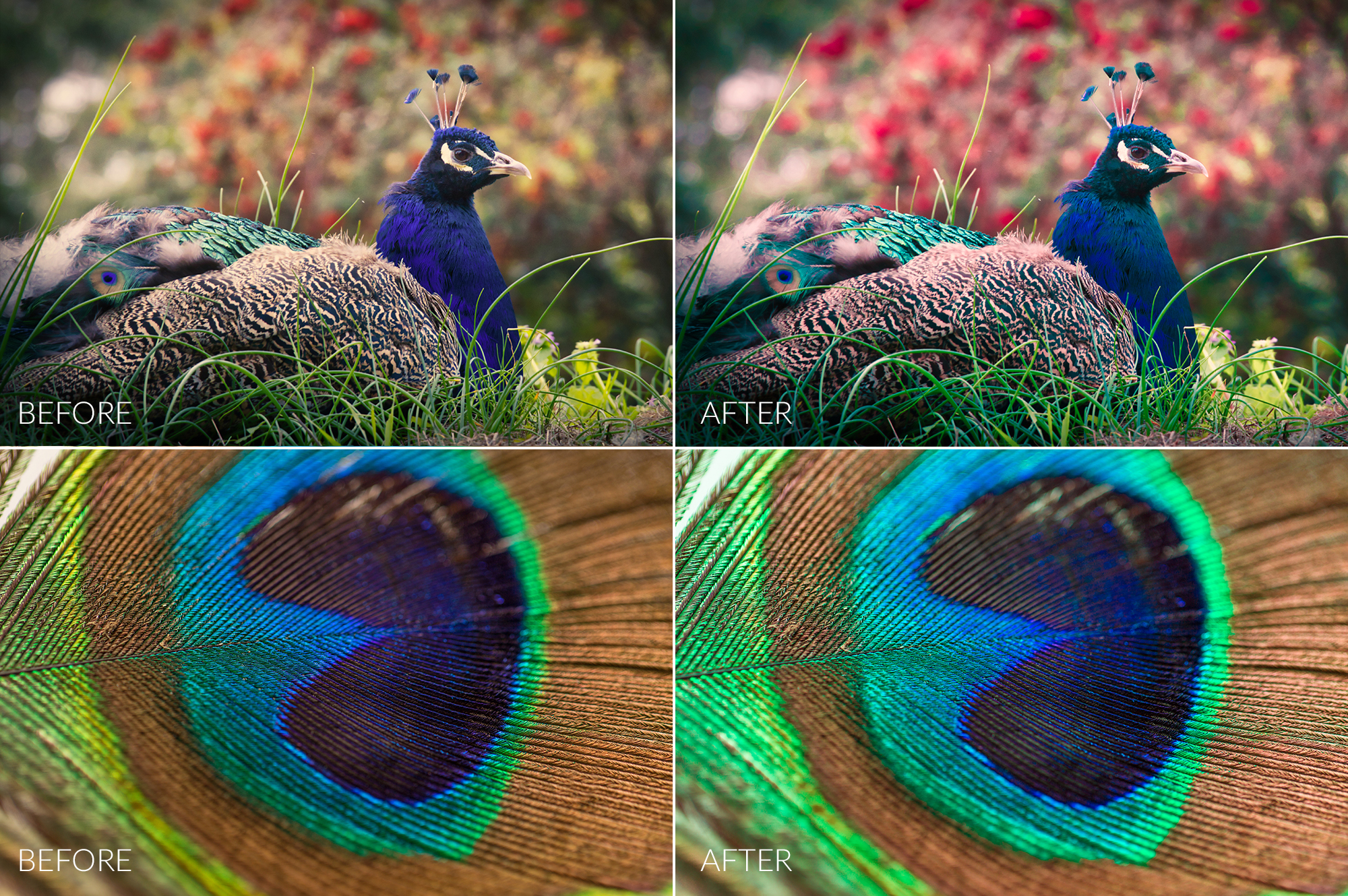 Peacock Lr Presets example image 3