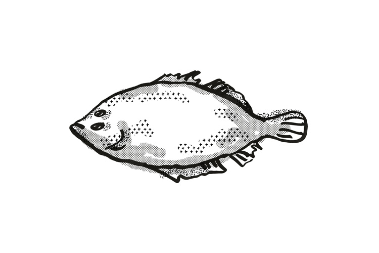 Lefteye Flounder Australian Fish Cartoon Retro Drawing example image 1