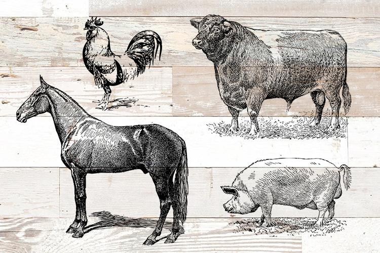 Vintage Bundle PNG, EPS, SVG Vector Farm Animals example image 1