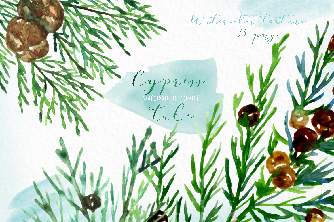 Cypress tale. Watercolor clipart. Cypress christmas branches example image 3