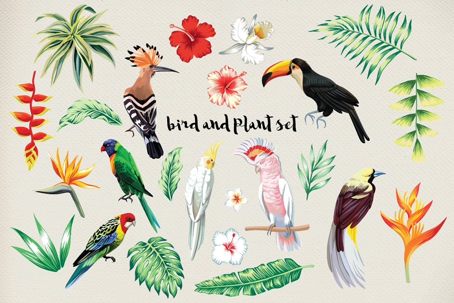 Jungle bird example image 11