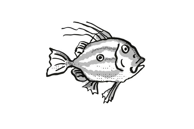 John Dory New Zealand Fish Cartoon Retro Drawing example image 1