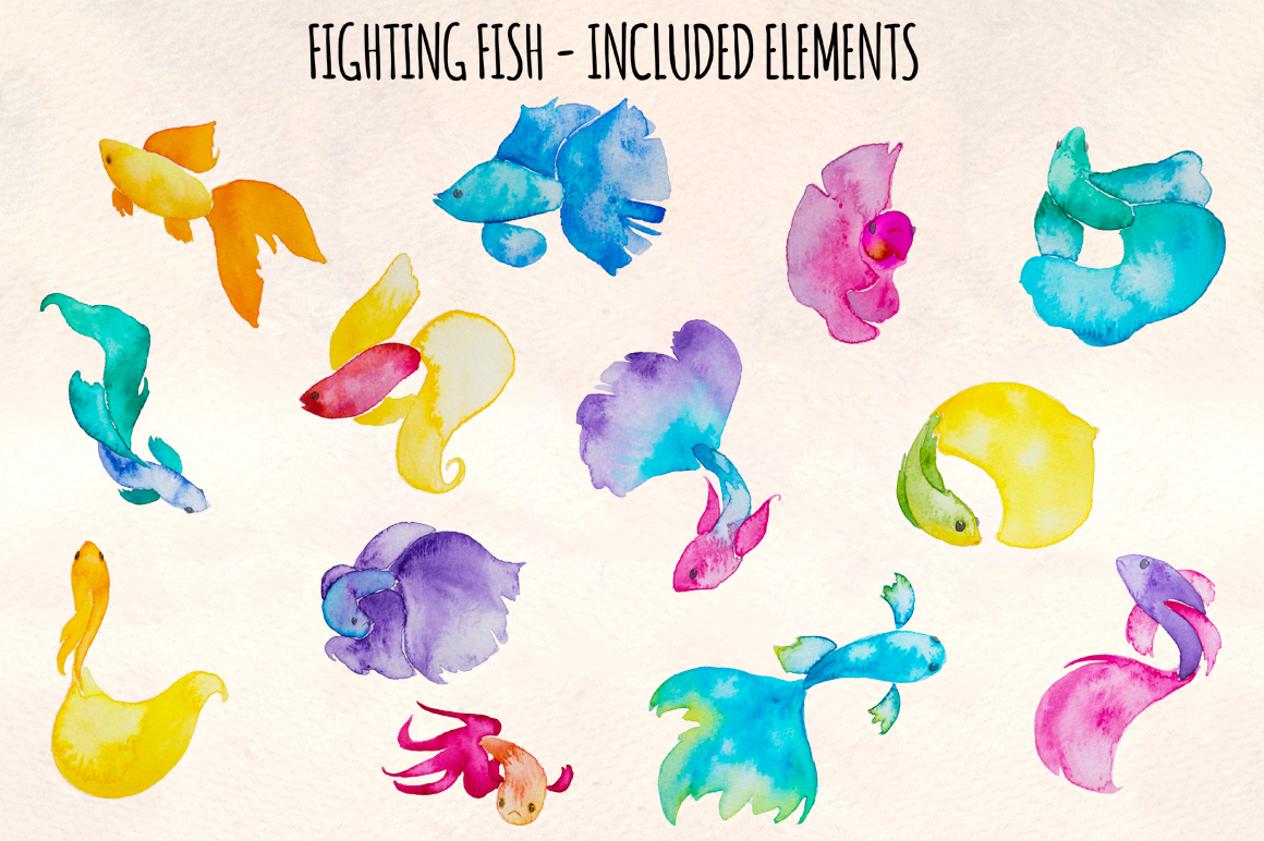 13 Beta Fighting Fish Watercolor Painting Elements example image 1