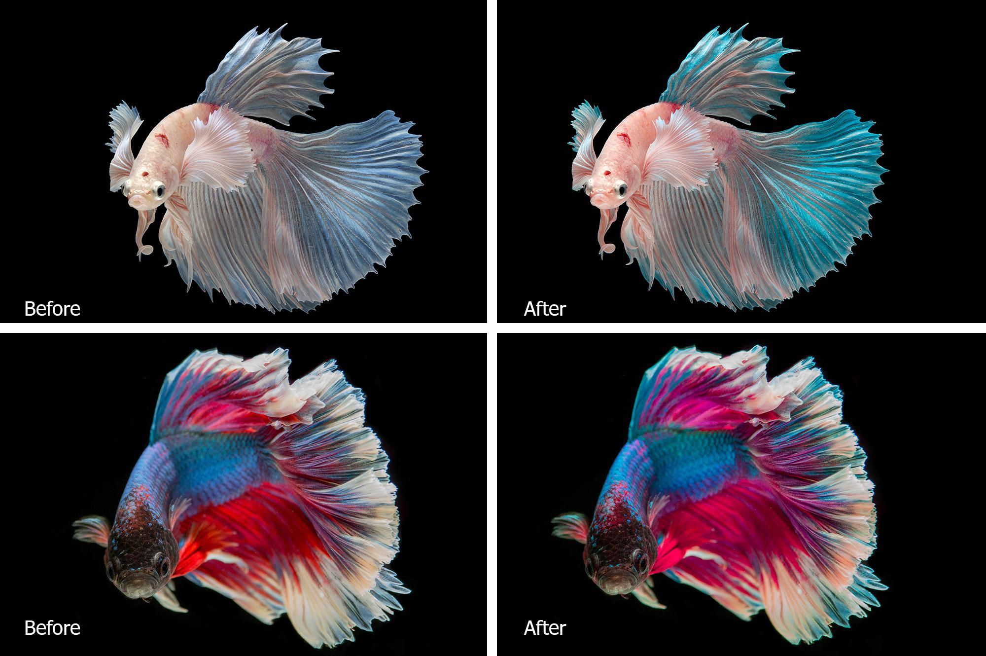 Betta Fish Lr Presets example image 2