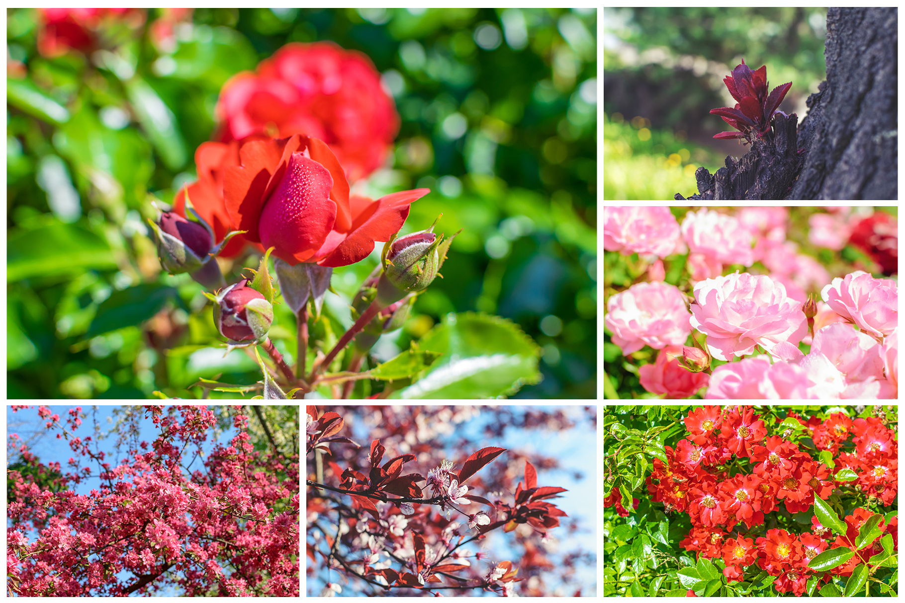 Spring Flowers and Paintings Bundle example image 21