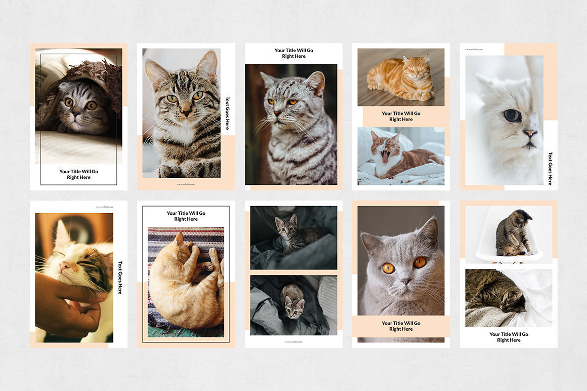 Cats Pinterest Posts example image 7