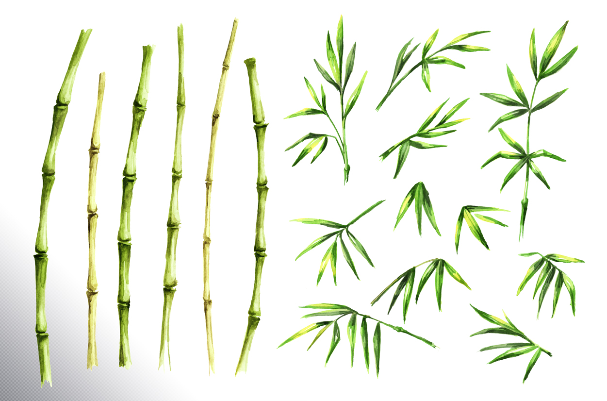 Bamboo. Watercolor collection example image 9