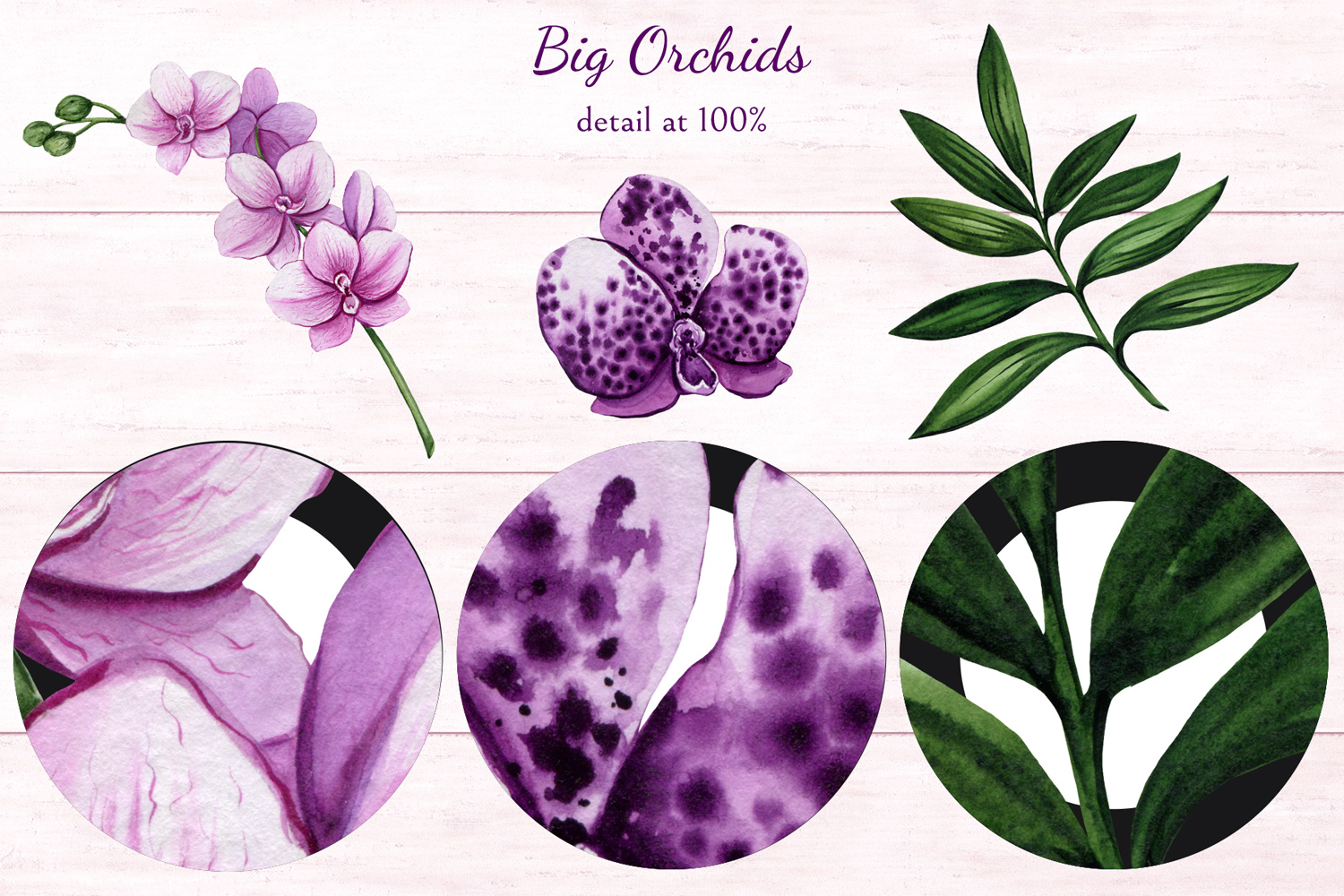 Big Orchids example image 10