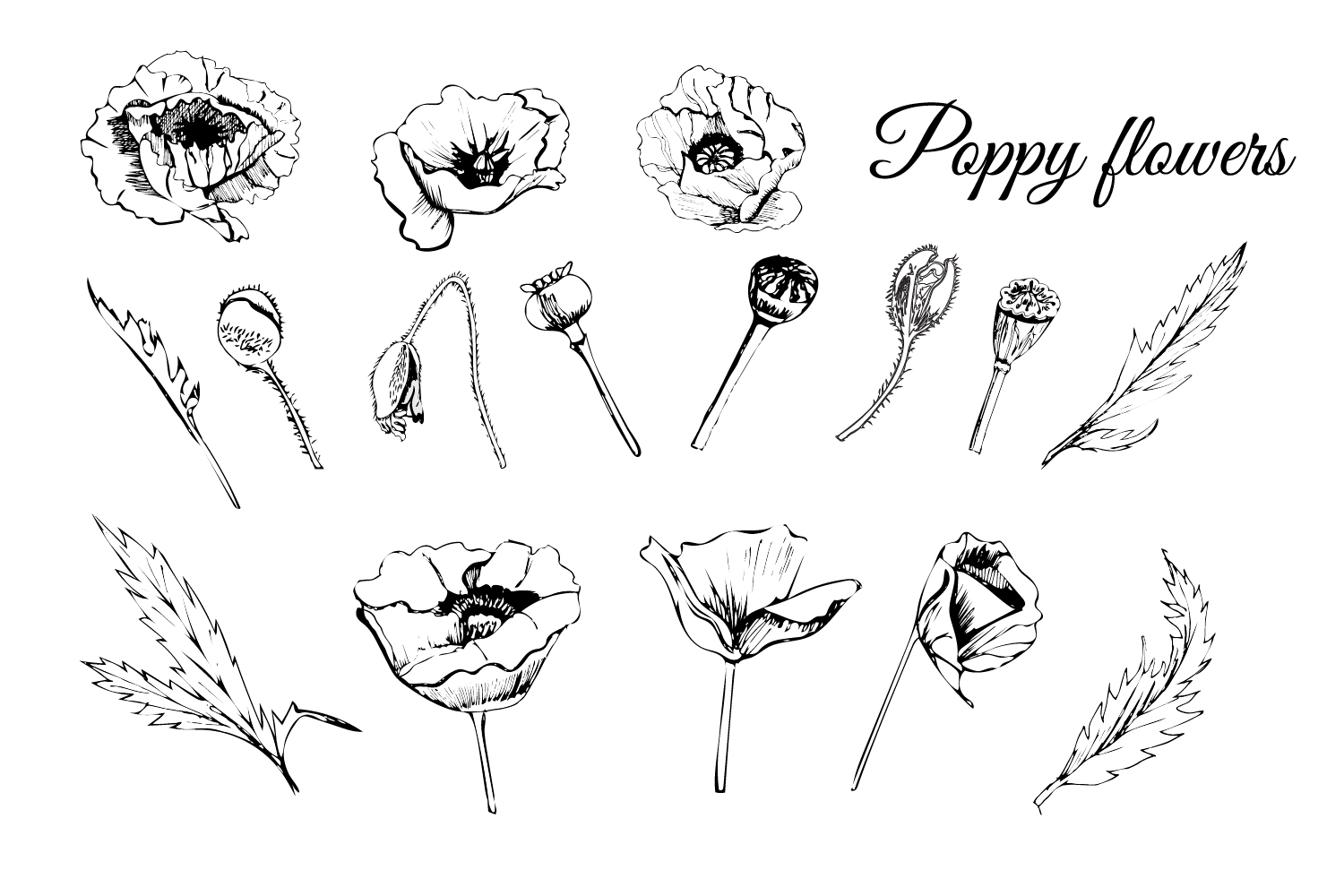 Bundle with sketches of poppy flowers. Modern and retro style.  example image 2