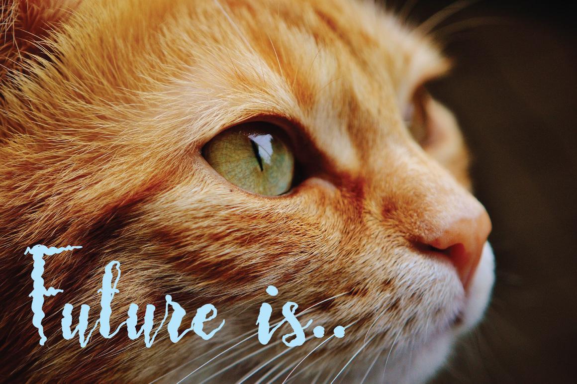Frizzy Bella Script example image 5