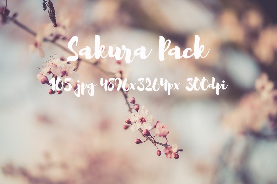 sakura photo pack example image 19