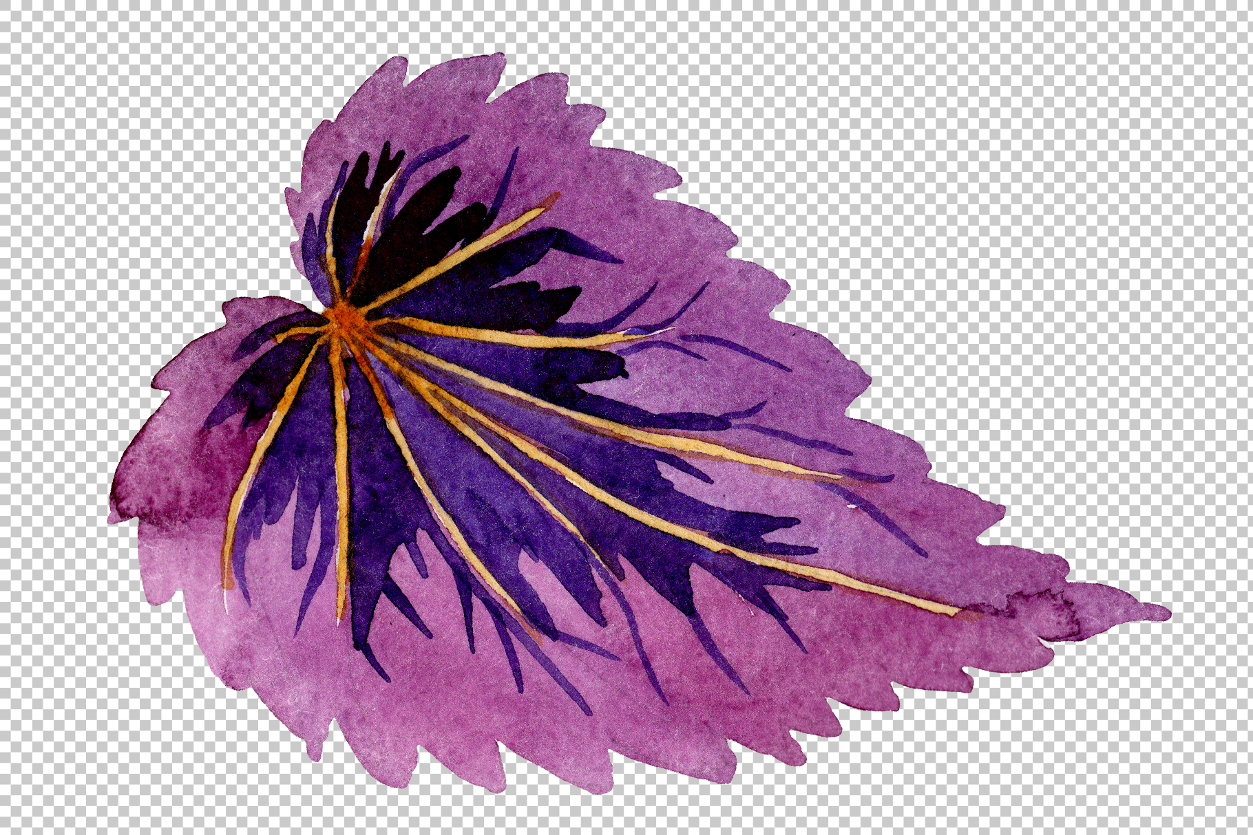Begonia leaves Watercolor png example image 2