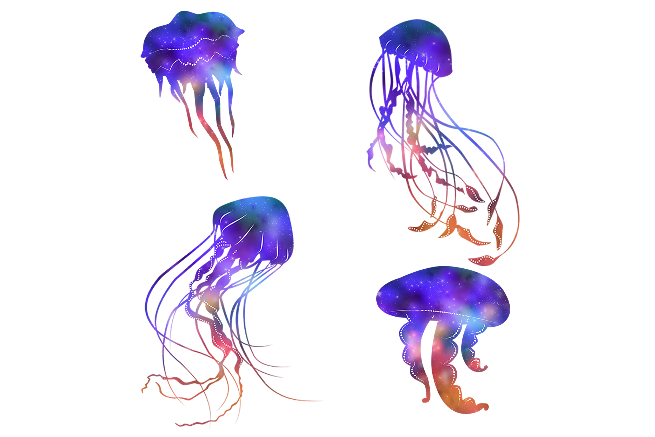 Jellyfish example image 2