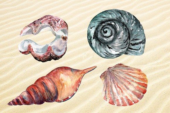 Watercolor Seashells Set - 8Png example image 3