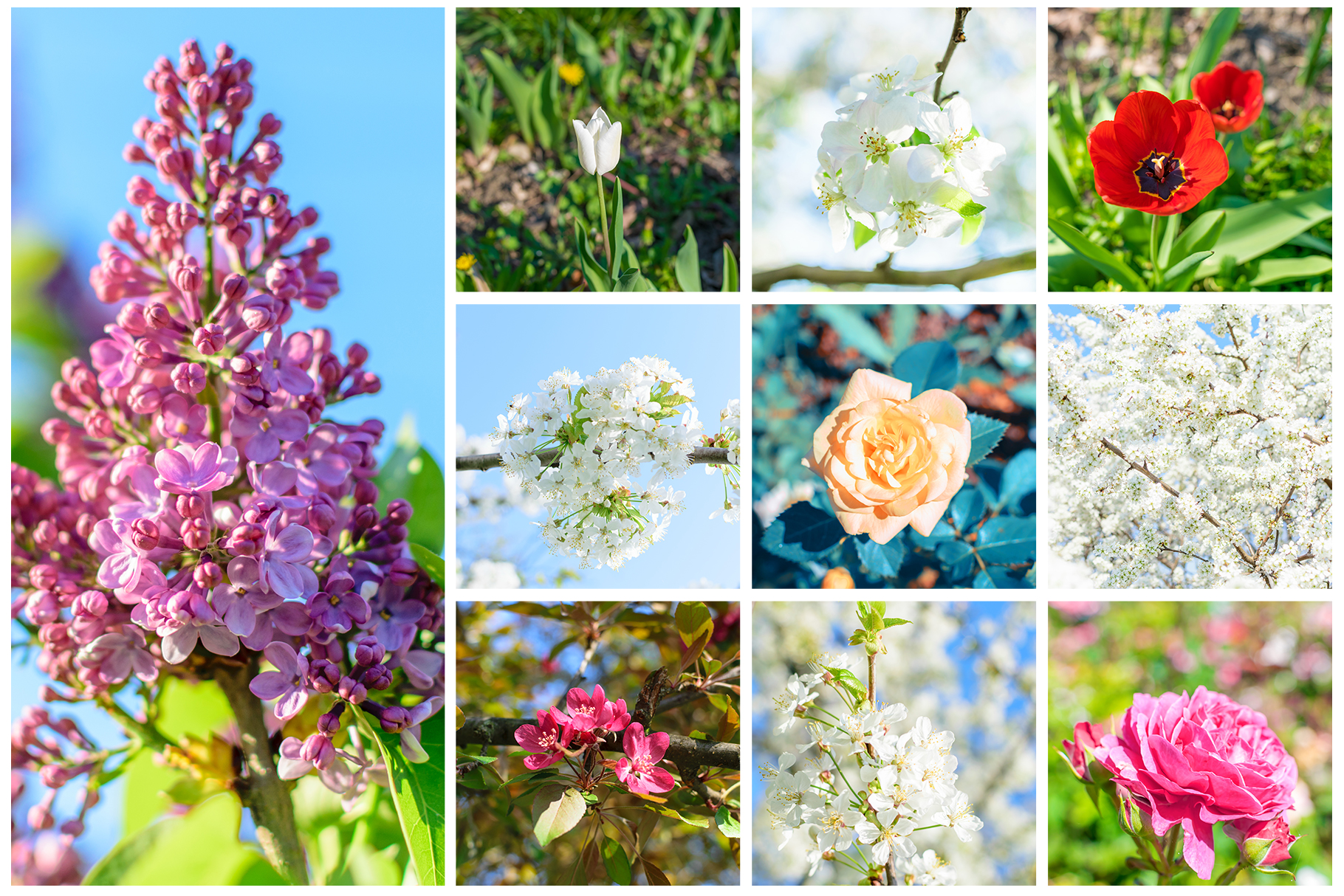 Spring Flowers and Paintings Bundle example image 11