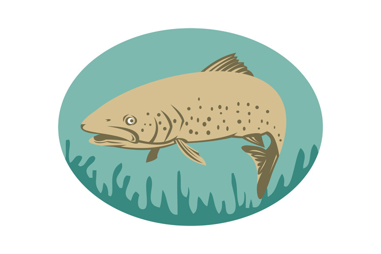 Spotted or speckled Trout swimming example image 1