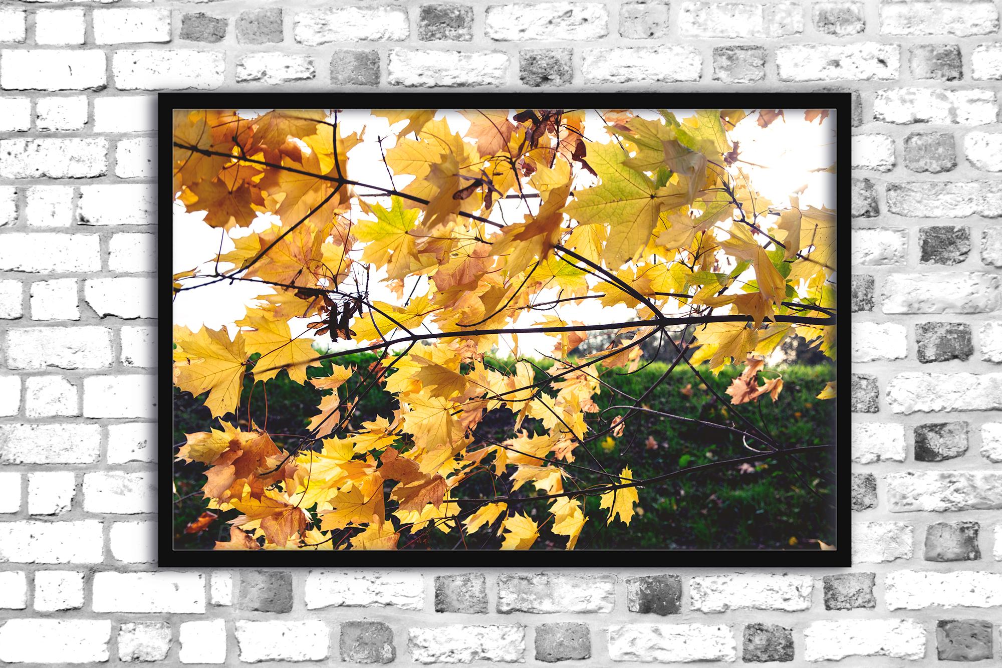 Nature photo, floral print, autumn print, floral example image 1