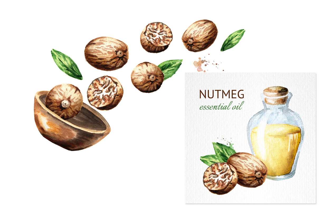 Nutmeg. Watercolor collection example image 4