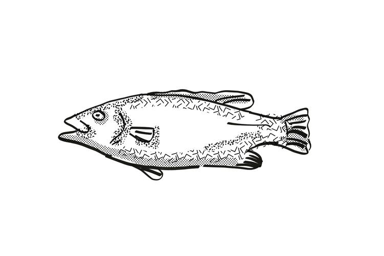 Hapuku New Zealand Fish Cartoon Retro Drawing example image 1