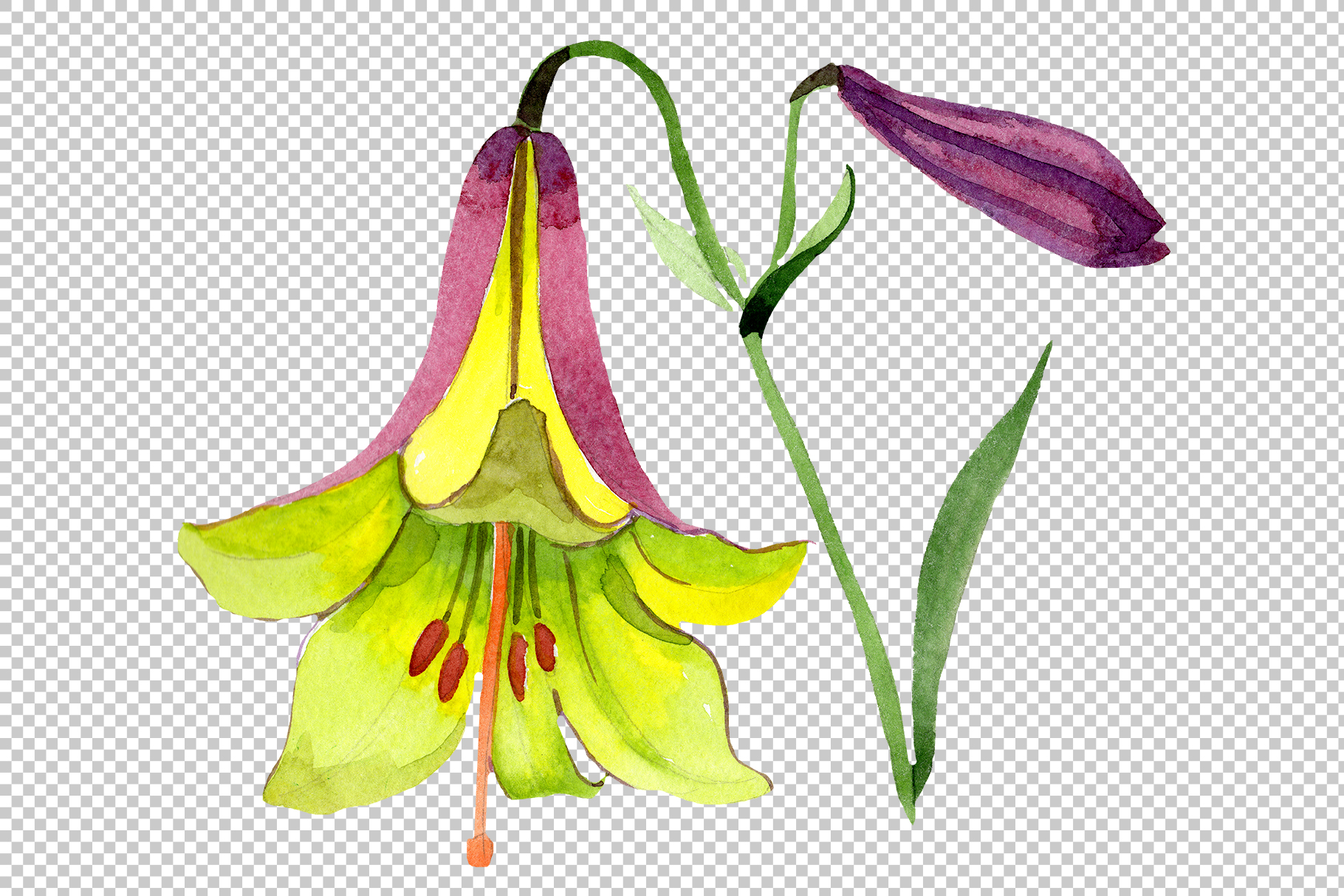 Wildflower lemon lily PNG watercolor set example image 2