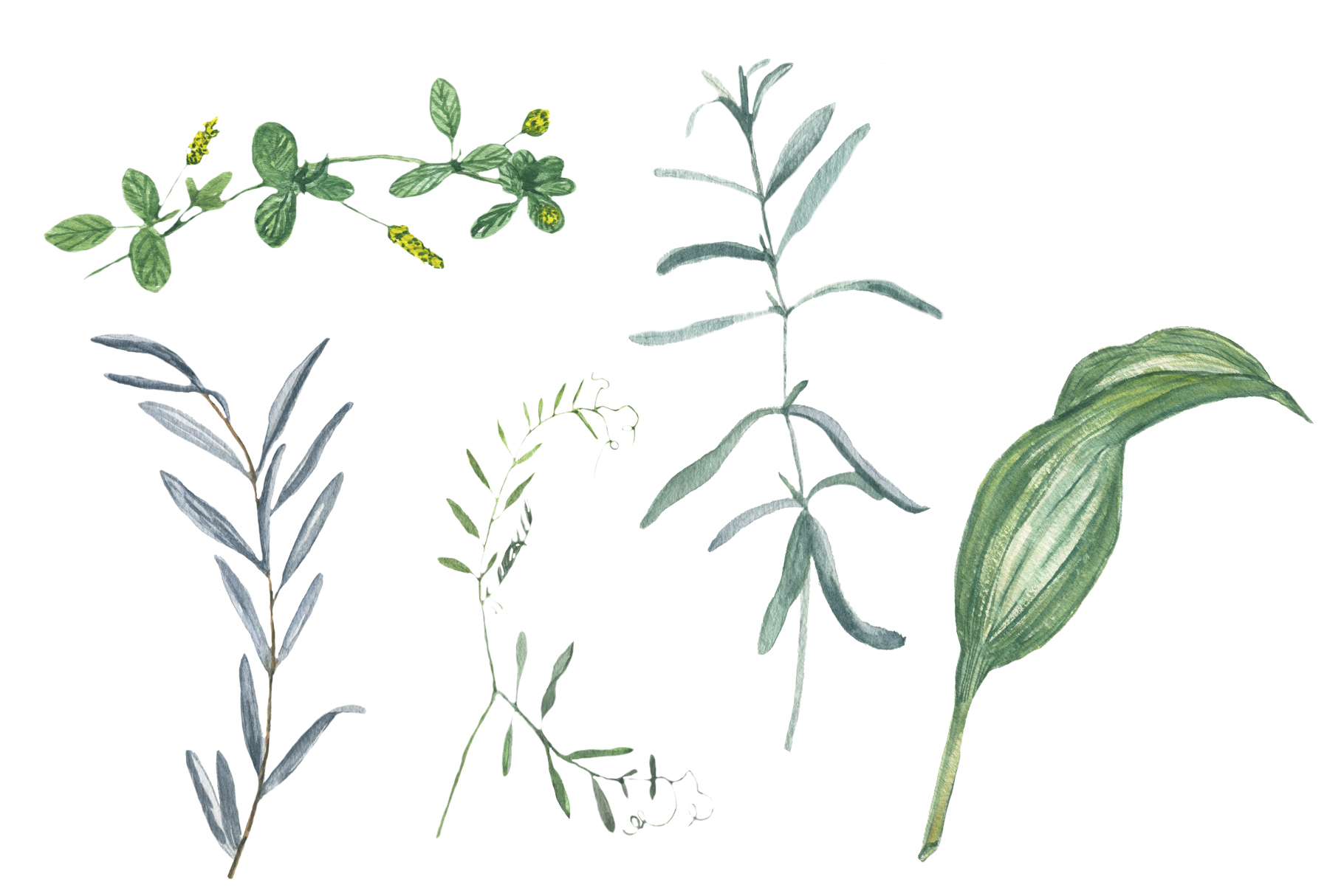 Watercolor grass and wildflowers example image 4