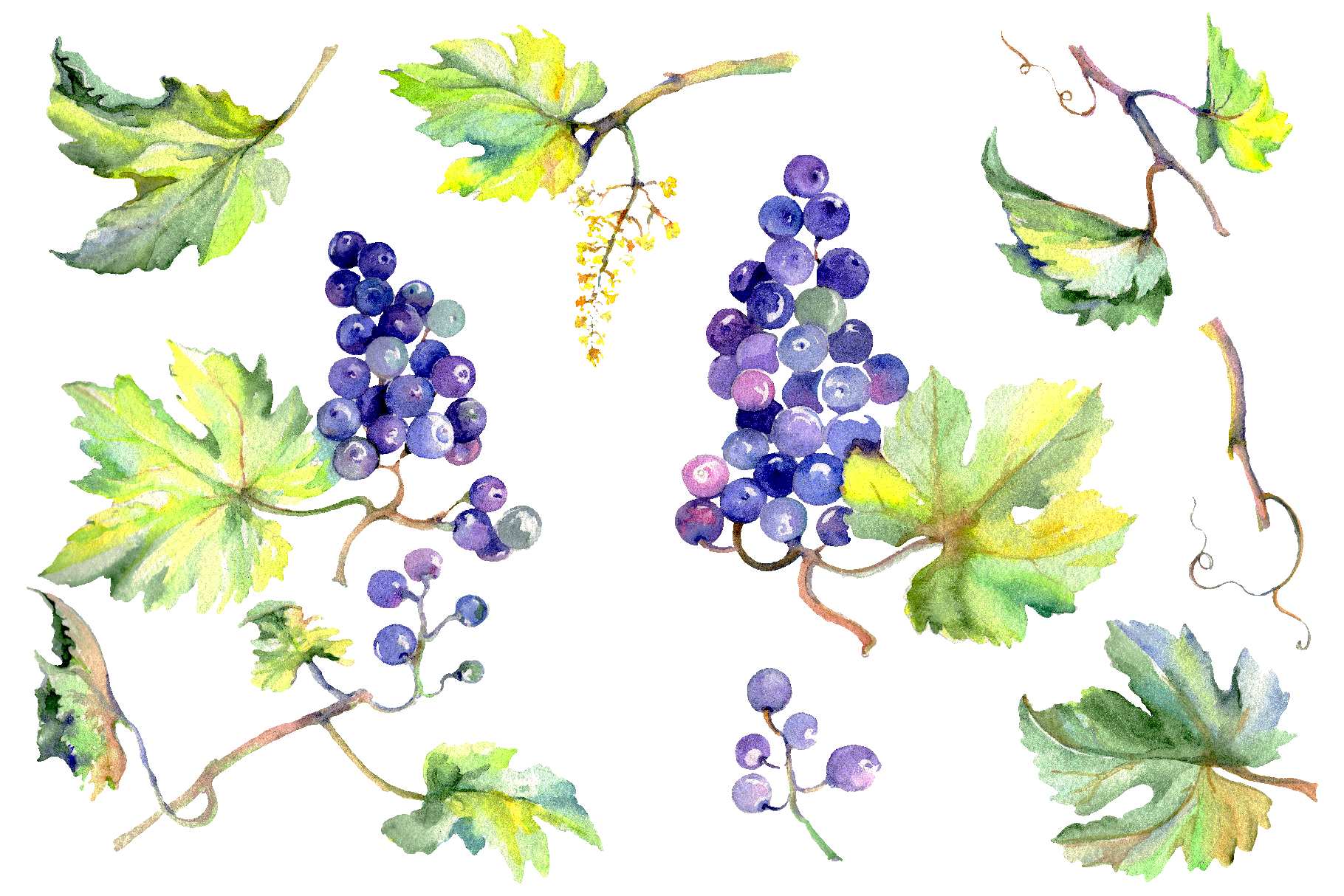 Grapes Watercolor png example image 1
