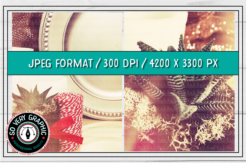 20 Vintage Succulents Holiday Styled Stock   Mock Up Bundle example image 5