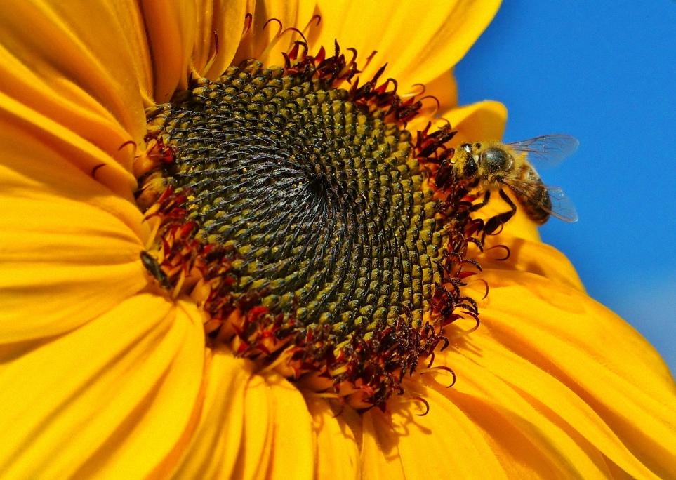 Sunflower example image 1