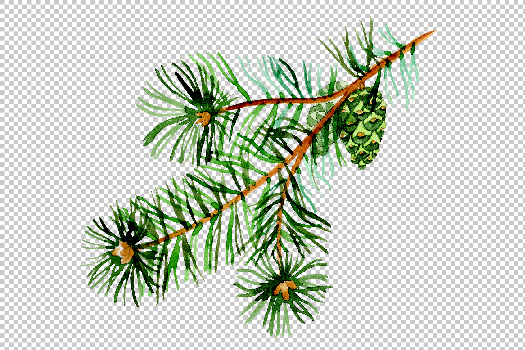 Branches of spruce and pine png watercolor set example image 2