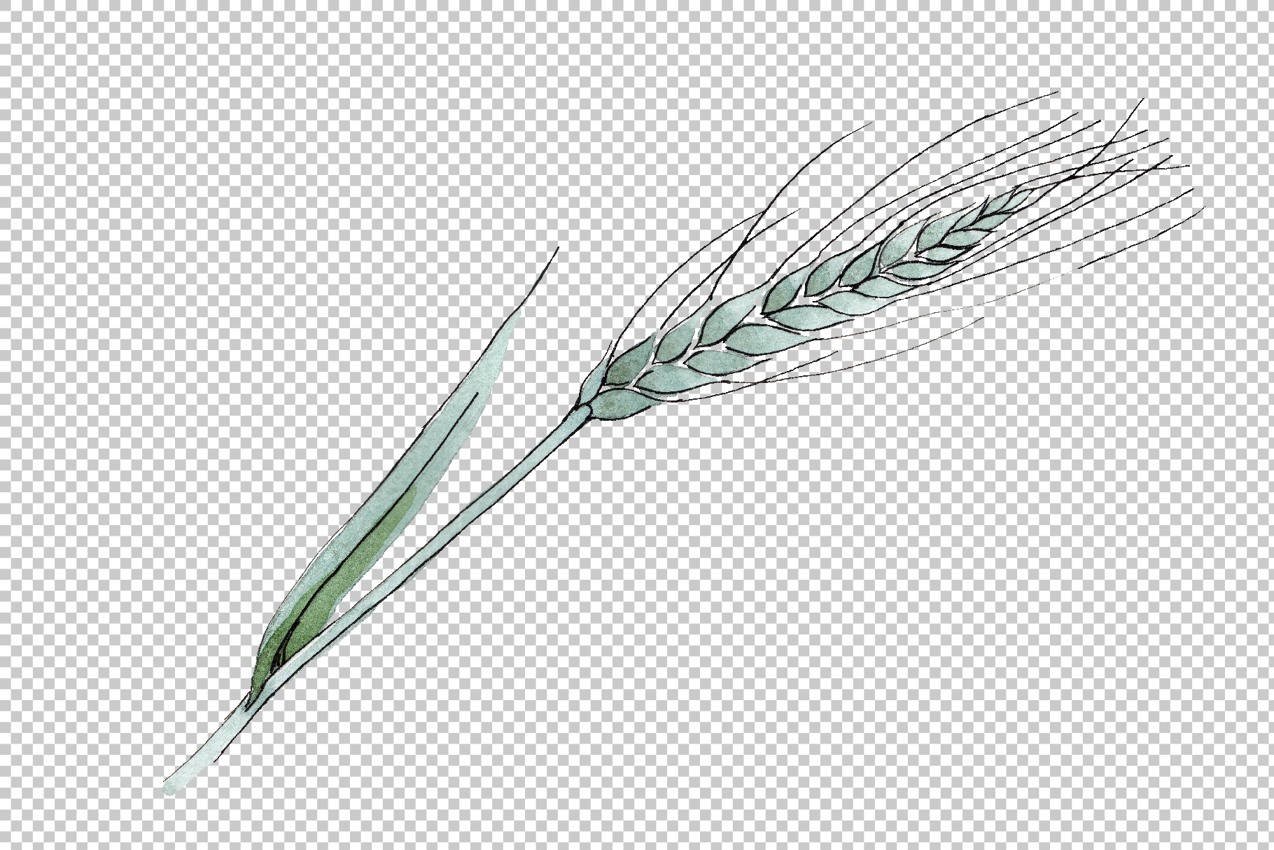 Spike of wheat Watercolor png example image 3