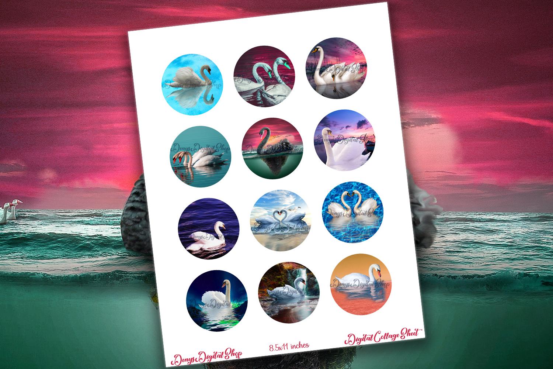 Swan Digital Collage Sheet,Swan Images,White Swan,Black Swan example image 2