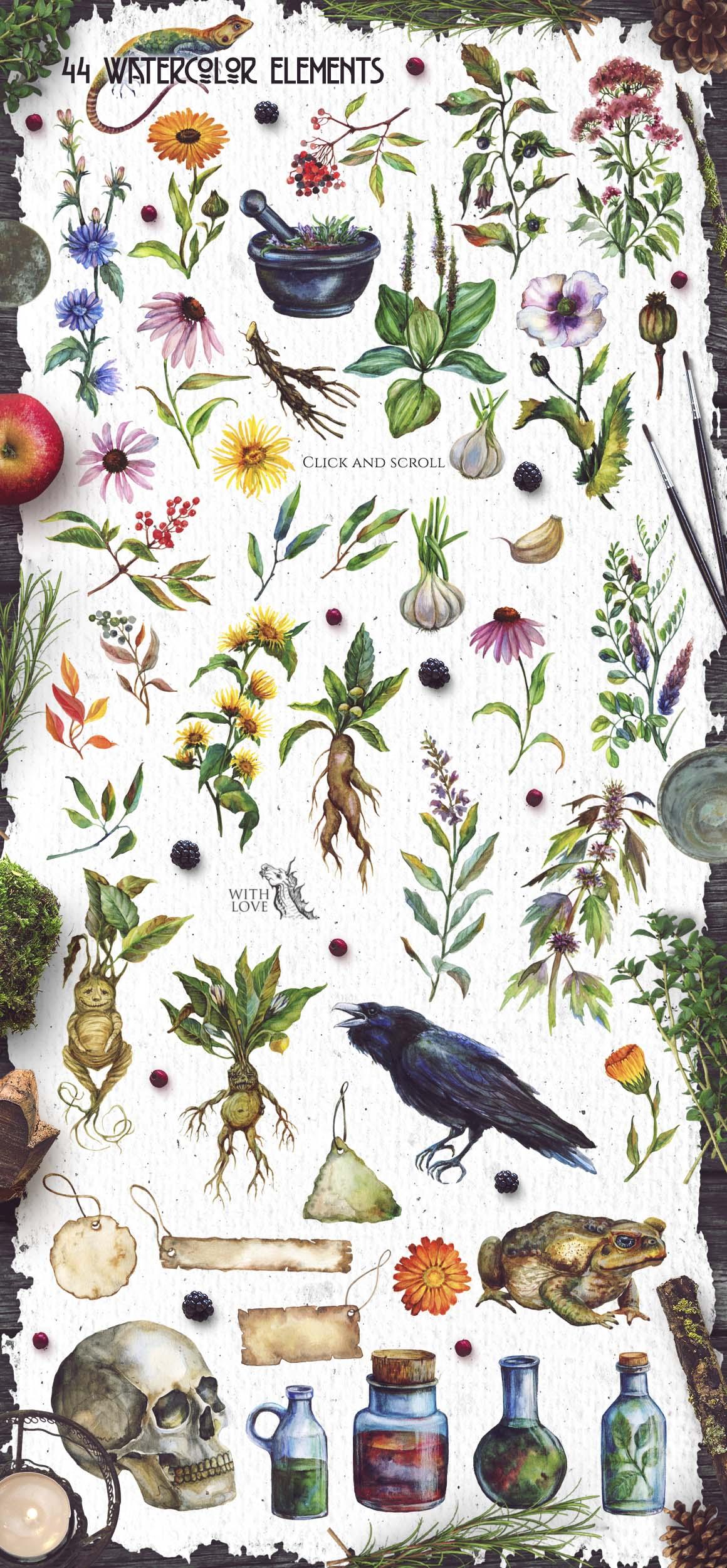 Watercolor Alchemy Medicinal Herbs example image 4