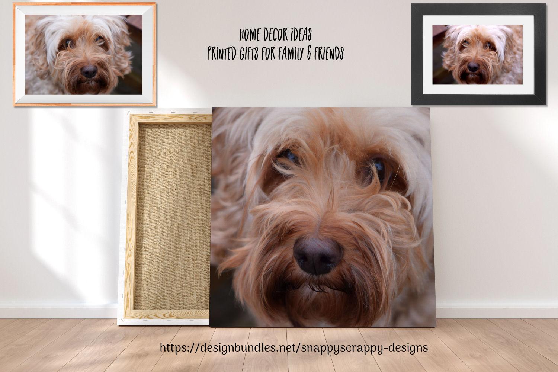 Animal Portrait Photographs example image 4