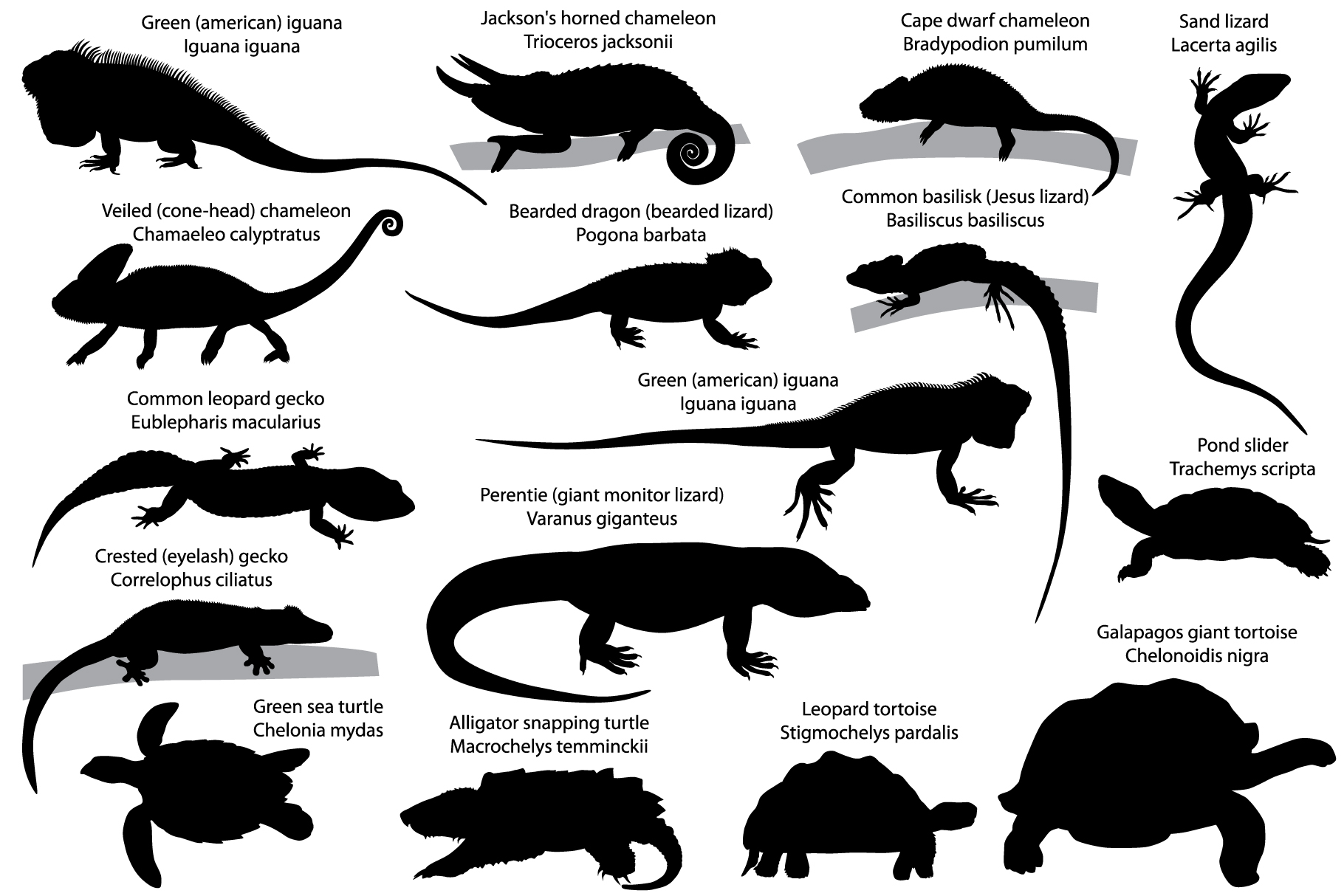 Silhouettes of reptiles example image 1